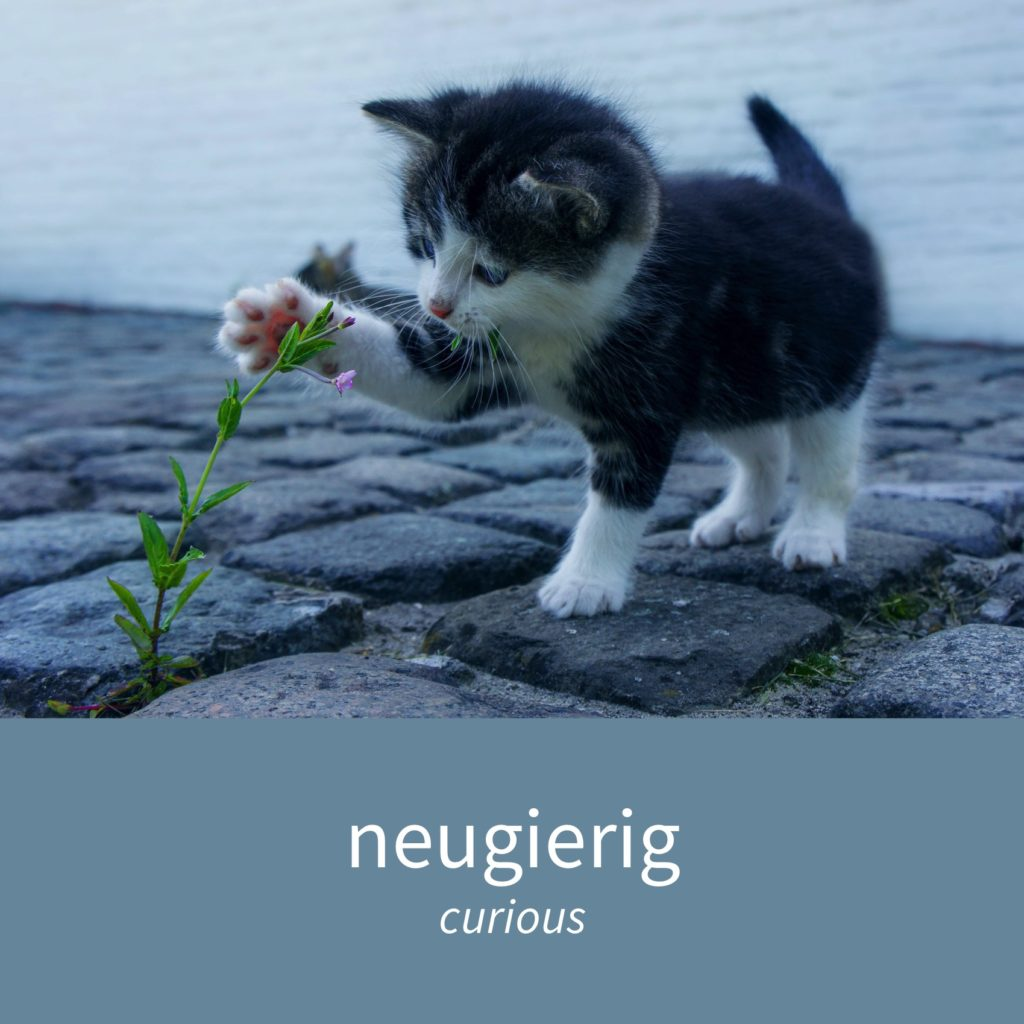 "Image showing a kitten curiously investigating a flower and the caption ""neugierig - curious"""