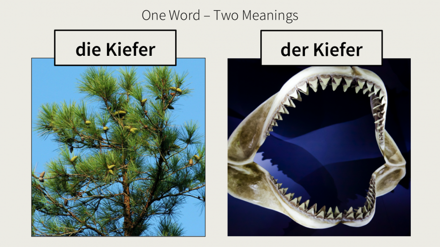 "Image of a pine tree and a set of jaws and the caption ""One word - two meanings: die Kiefer - der Kiefer"""